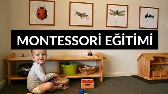 montessori eğitim modelleri